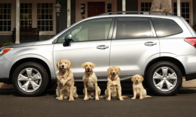 subaru-dog-tested-dog-approved-commercials
