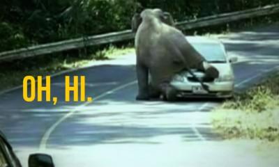 Thai elephant car